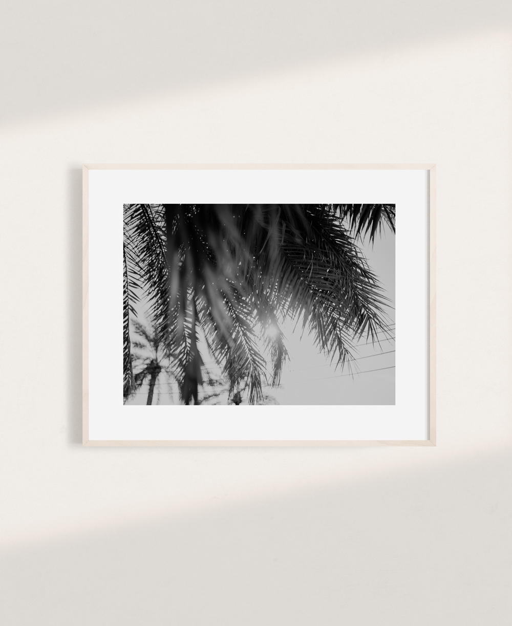 nicischwab-prints-002-palmtree-black and white