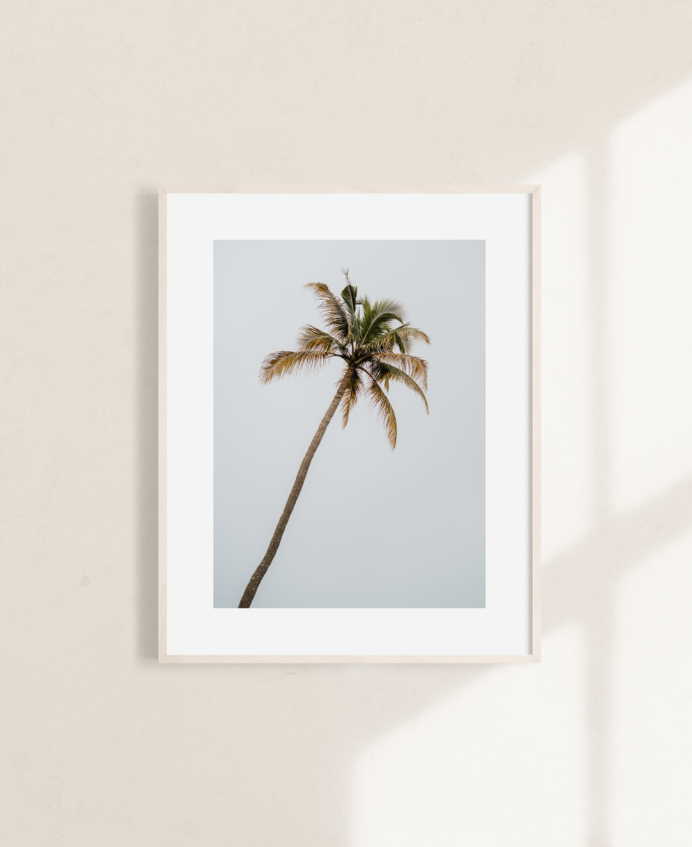 nicischwab-prints-003-palmtree-india