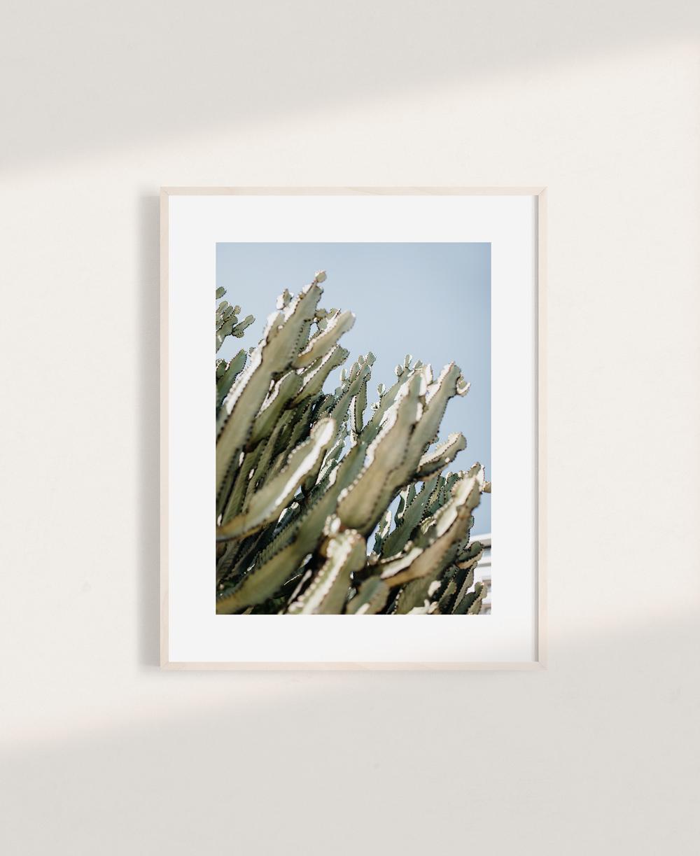 nicischwab-prints-013-kaktus