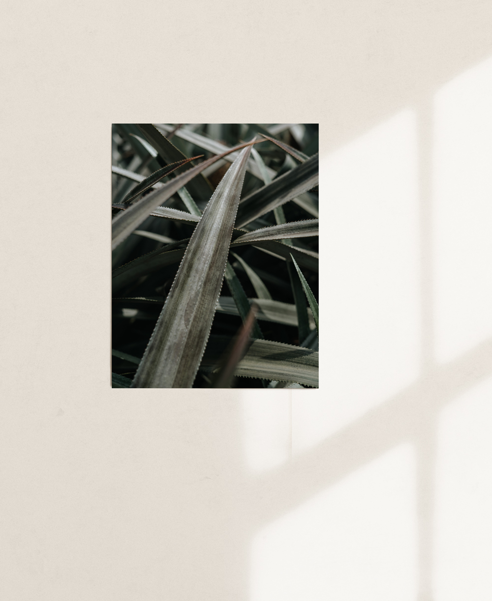 nicischwab-prints-02-003