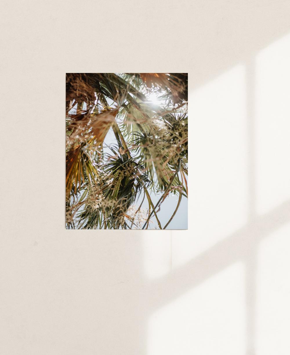 nicischwab-prints-02-010