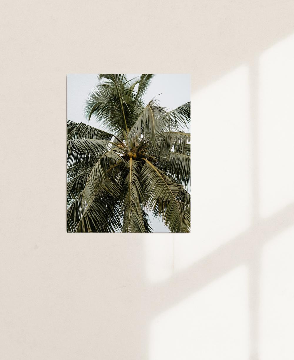 nicischwab-prints-02-013