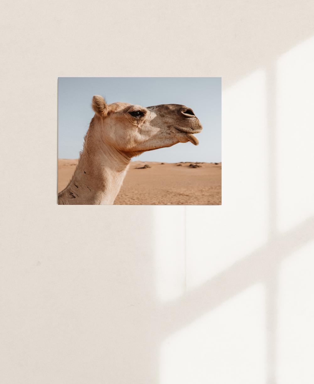 nicischwab-prints-02-015